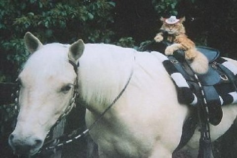 Ten of the Worlds Craziest Animal Friends Ever Spotted