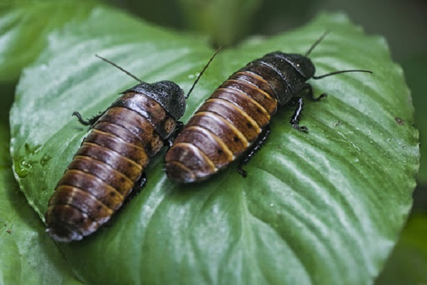 Facts About Cockroaches