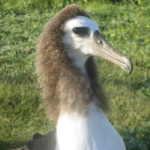 Would you consider an Albatrosses to be a romantic bird?