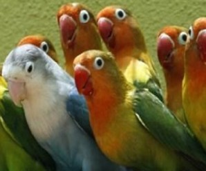 Ten of The Most Romantic Birds In The World