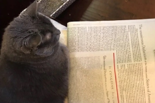 Declaration of Independence Cat