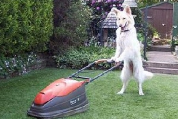 Ways to Make Sure Your Yard Always Looks Fresh - Mowing
