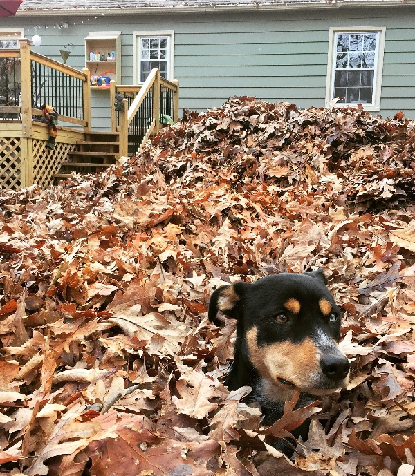 Ways to Make Sure Your Yard Always Looks Fresh - Remove Leaves Early