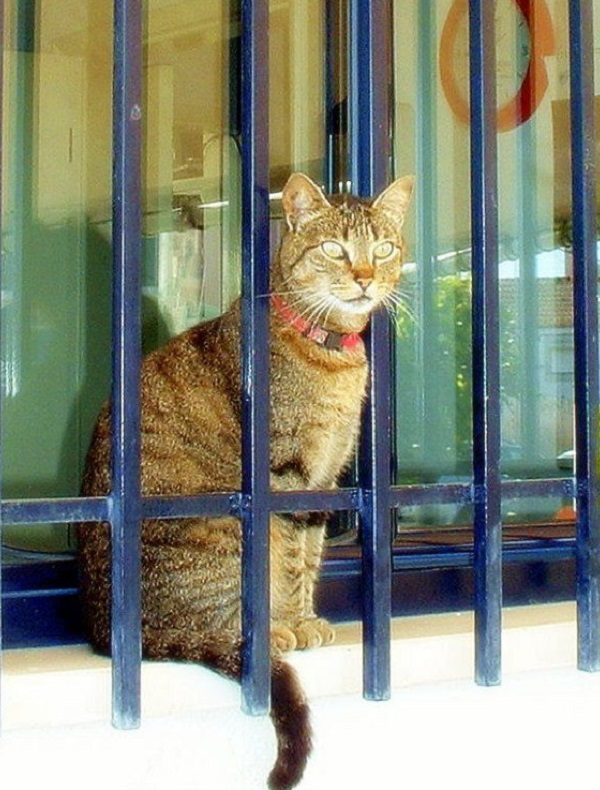 Cat Behind Bars