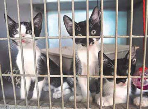 Cats Behind Bars