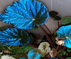 Ten Amazing Plants With Weird and Unusual Leaves