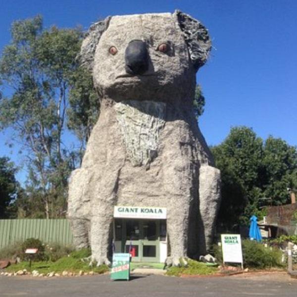 Giant Koala, Australia