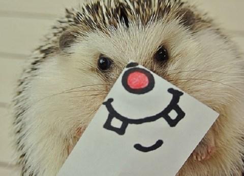 Ten Tips for Encouraging Hedgehogs Into Your Garden