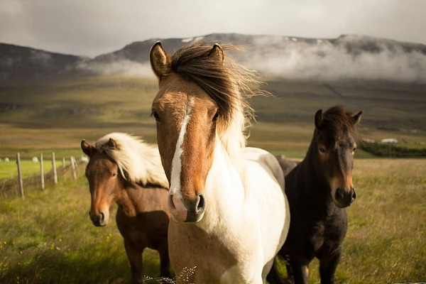 It is a fact that horses are one of the most photogenic animals on the planet