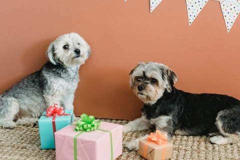 Top 10 Gift Ideas for Your Pet