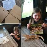 3D Alligator Puzzle