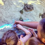 Ding Darling Wildlife Refuge Touch Tank