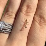 Baby Praying Mantis!