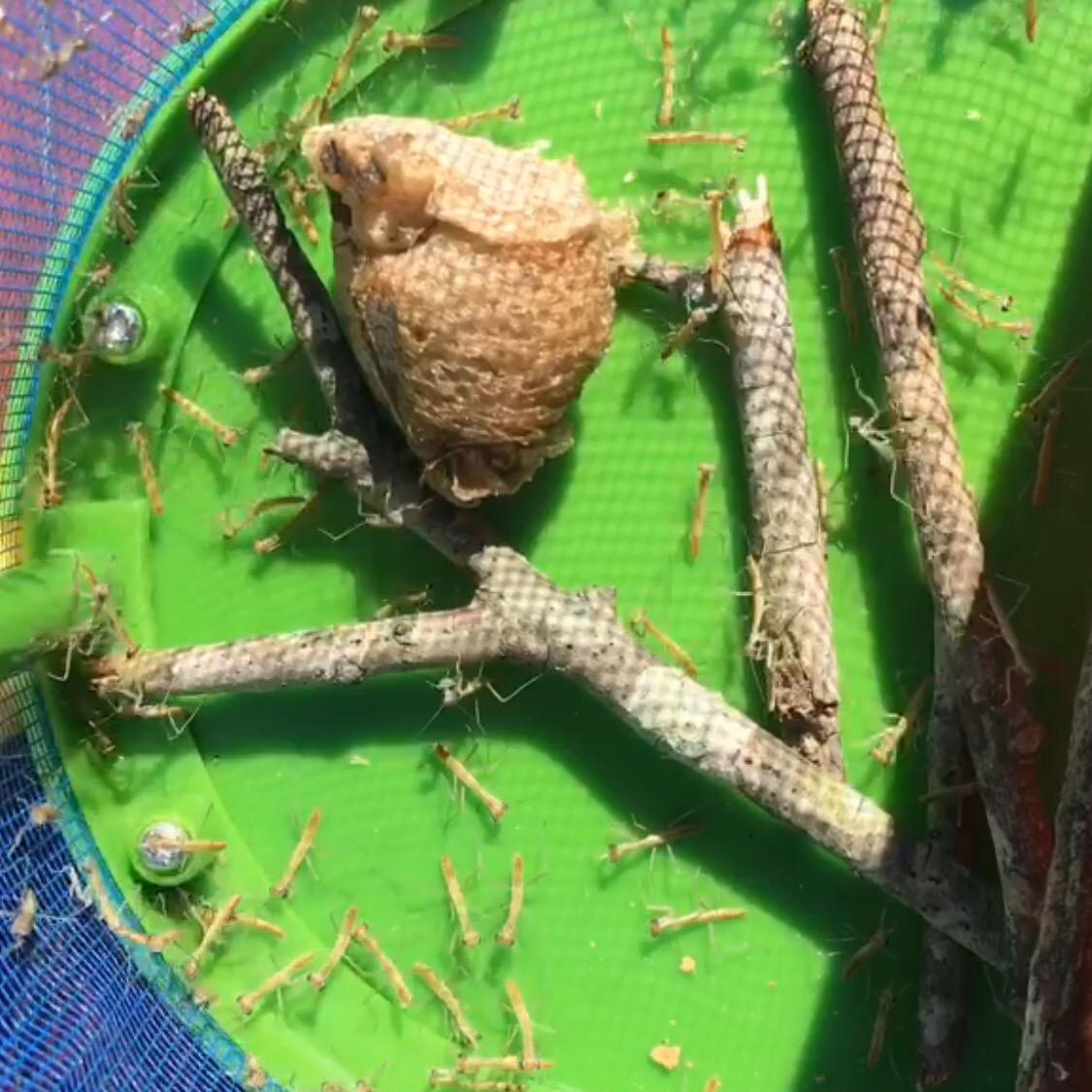Food For Praying Mantis Babies