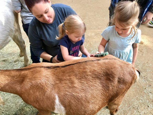 Zoo Atlanta Petting Area