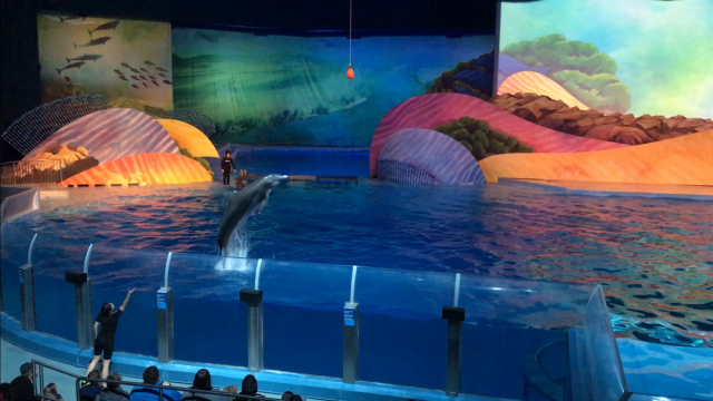 Dolphin Presentation at Indianapolis Zoo