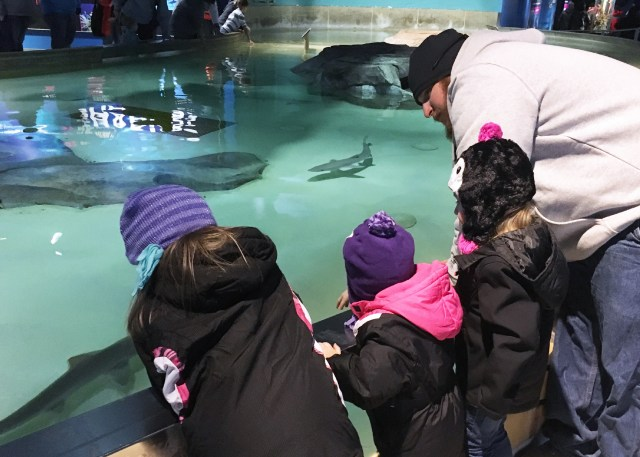 Indianapolis Zoo Shark Tank