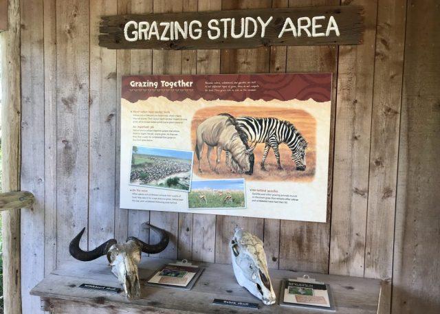 Grazing Study Area