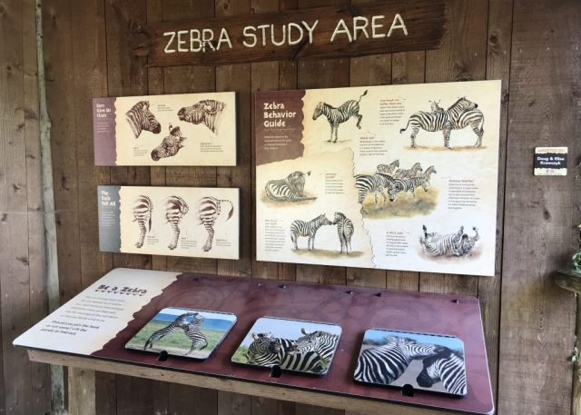 Zebra Study Area