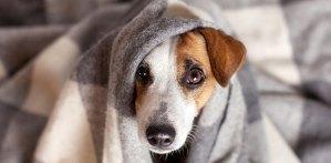 rassel under blanket