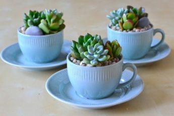 This is absolutely regal. Beautiful ice blue crockery and plants in the same colour family. Those silver blue-green succulents almost blend in with the cups, and that gives such a lovely effect. Image source: http://thekavicliving.weebly.com/diy/diy-creative-planters-for-your-garden