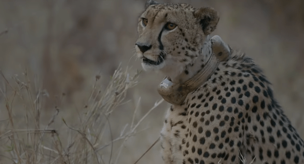 National Geographic Meets The Amazing Rangers Who Are Saving Africa's Wildlife image of National Geographic