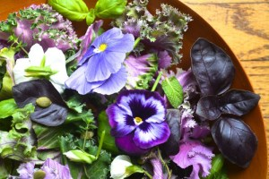Spring Kale and Herb Salad with edible flowers