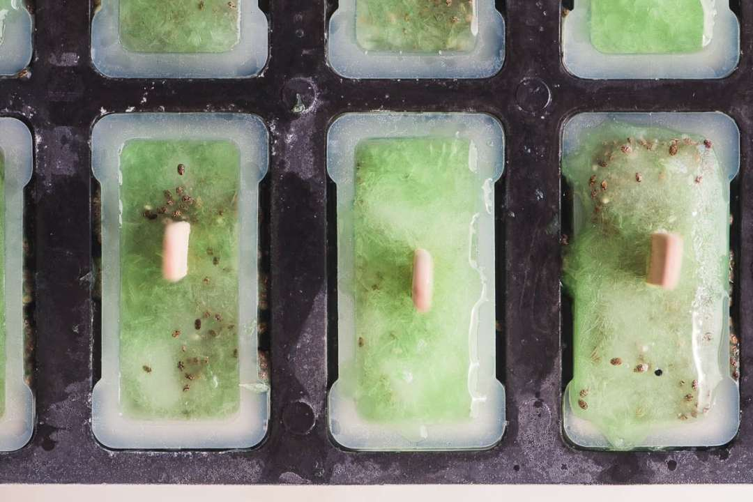 chia limeade popsicles chilling in the popsicle mold