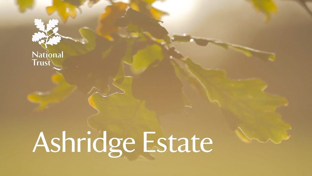 Events and What's at On Ashridge Estate Hertfordshire