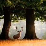 Events and What's On Ashridge Estate Hertfordshire