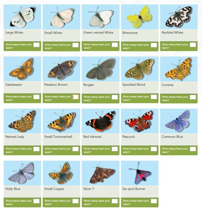Be Part Of The Big Butterfly Count 2018
