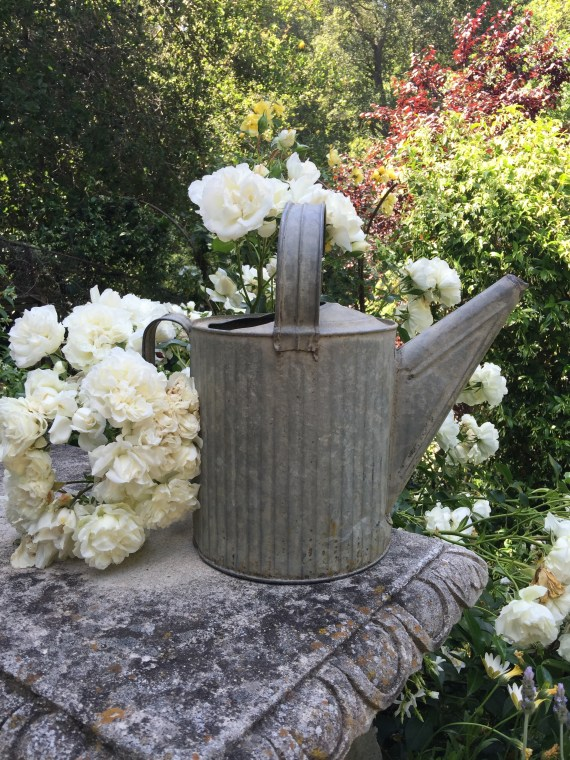 Watering CAN......