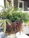 I love the red sedum leaves among the green boughs in this basket. The sedum should come back in the spring.