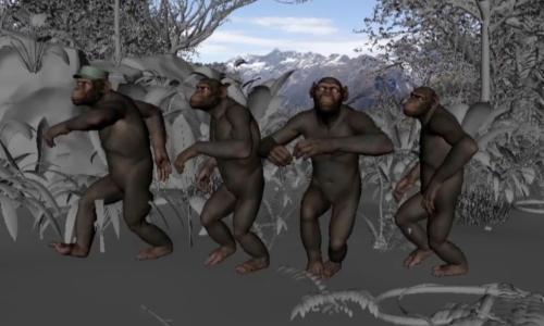 cg apes adventure of a lifetime
