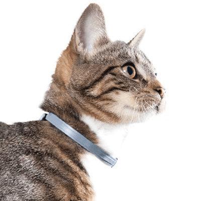 Flea Collar for Cat
