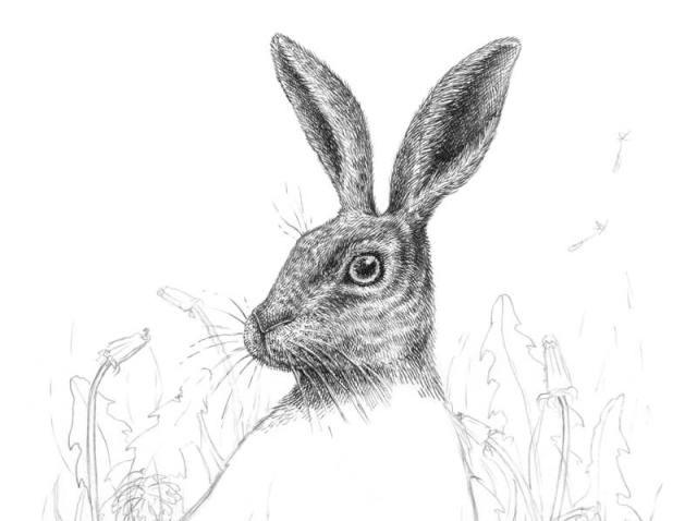 Drawing rabbit ears with ink