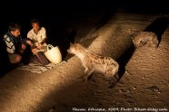 Harrar, Ethiopia -- Feeding the hyena. Wild hyenas in Eastern Ethiopia's Harrar are considered sacred. Special people feed them with raw meat at night. The tradition is now a tourist attraction, a bit elusive, but by asking not hard to find. 08 January 2009 Photo by Bikem Ekberzade
