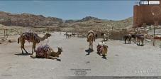 Camels and Donkeys at Petra, Jordan