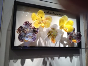 Orchid Floral display