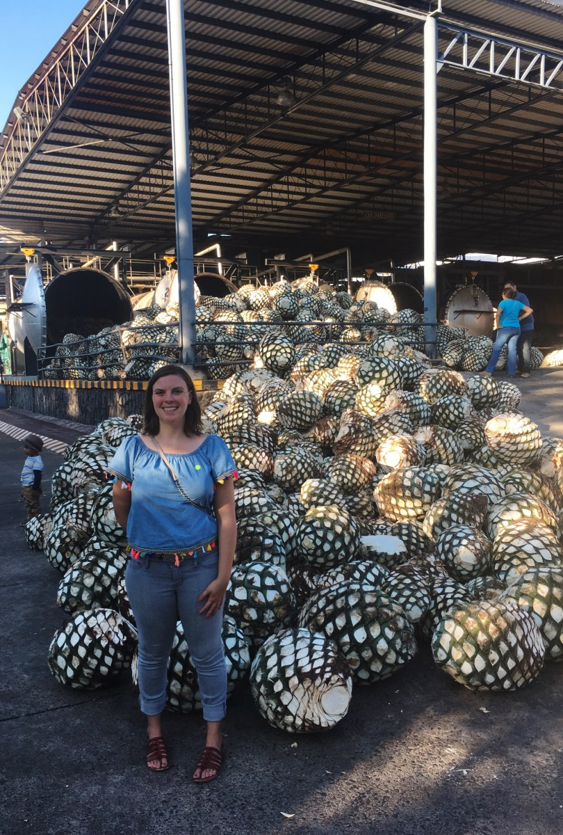 How to visit Tequila Factories in Tequila, Mexico Cheaply by Bus