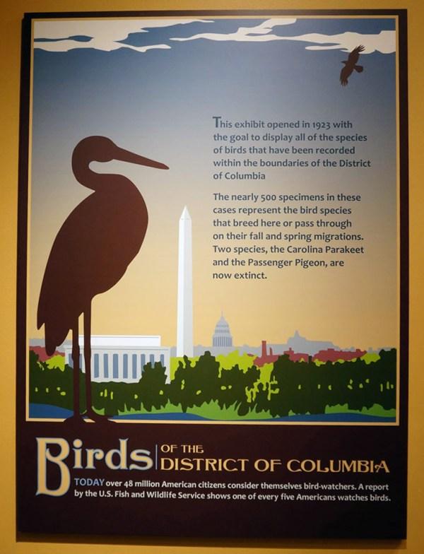 photograph of bird poster