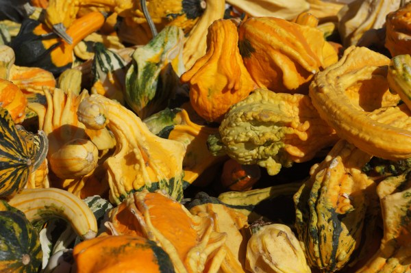photograph of mini gourds