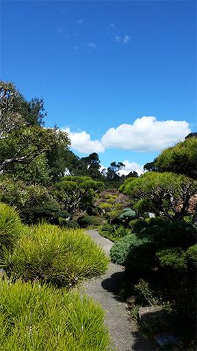 photograph of Japanese tea garden path
