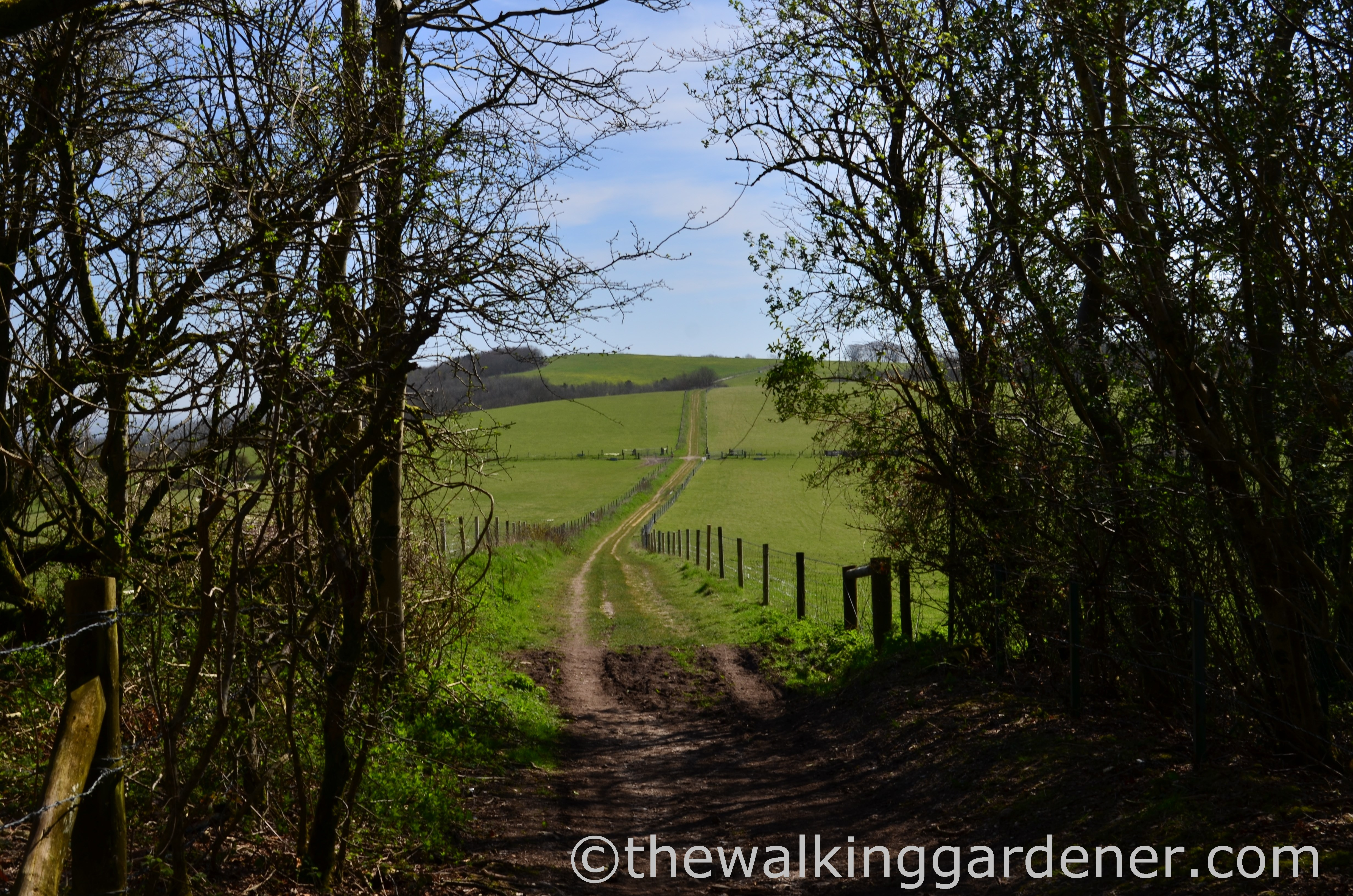The South Downs Way: Day 3 – South Harting to Amberley