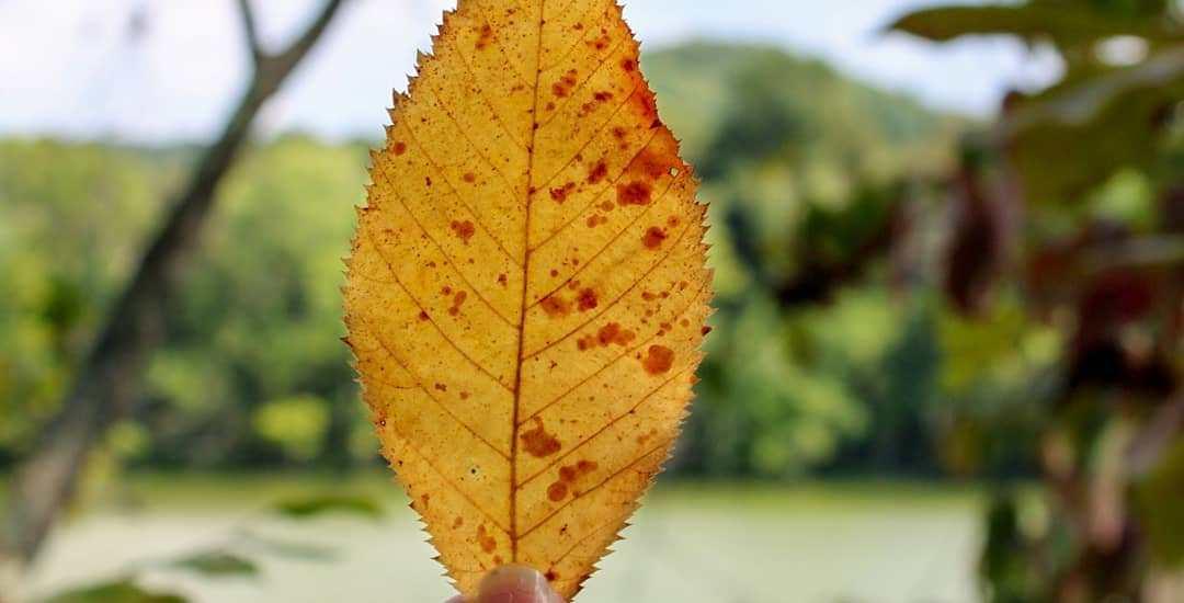 fall leaves autumn leaves season