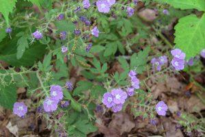 wildflowers tennessee stone door