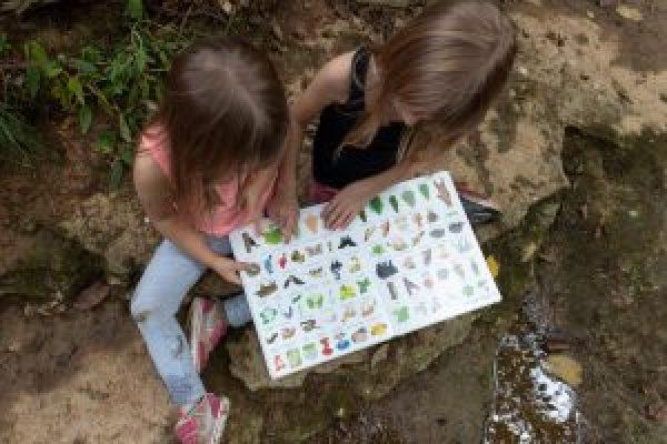 usborne nature books childrens book books for kids