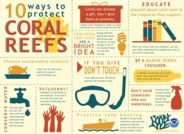 coral reef infographic world reef day