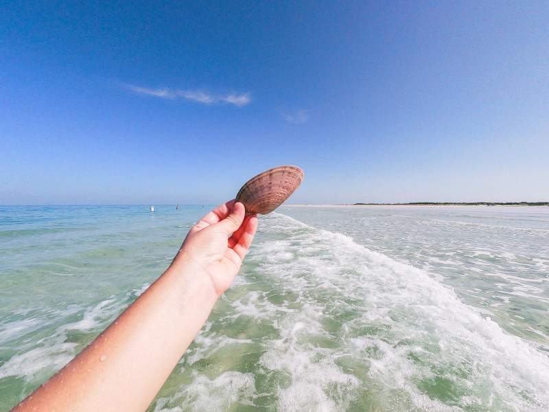 seashell at the beach waves fort de soto st pete florida
