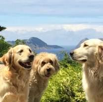 Los que más disfrutan de las casas de campo: los niños y las mascotas
